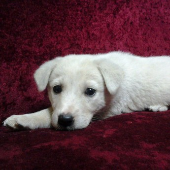 puppy street pup turkey turkiye animal shelter