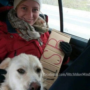 dog hitchhiking companion autostop romania winter