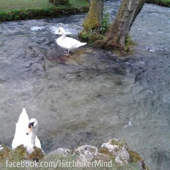 sarajevo bosnia and herzegovina vrelo bosne pond