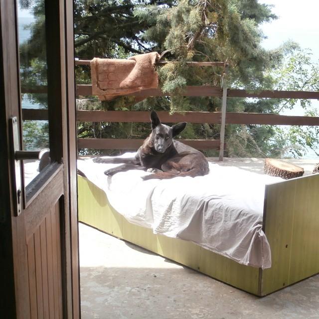 lu lu the dog montenegro kruce crna gora couchsurfing