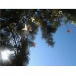 seaside shenanigans montenegro crna gora kruce beach tree decoration