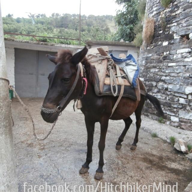 equestrian fashion in albiania horse backpack