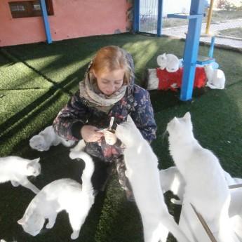 van lake turkey cat sanctuary