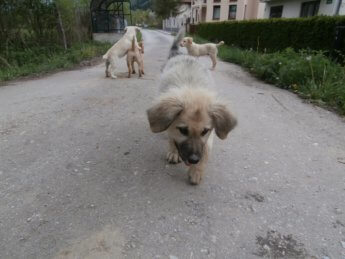 photogenic street pups bosnia and herzegovina sarajevo 2
