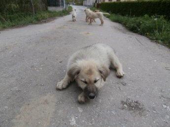 photogenic street pups bosnia and herzegovina sarajevo 3
