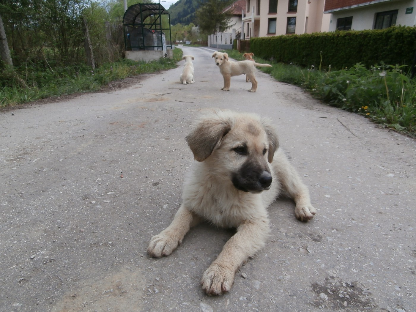 photogenic street pups bosnia and herzegovina sarajevo 4