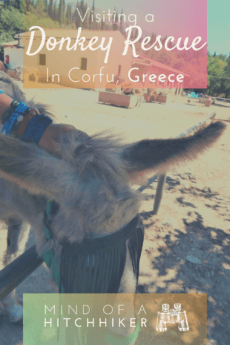 Corfu donkey rescue Greece Ionian islands animal shelter