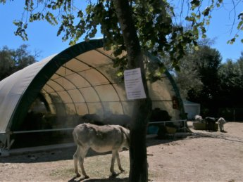 Corfu Donkey Rescue Greece 10