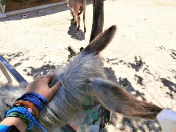 Corfu Donkey Rescue Greece 11