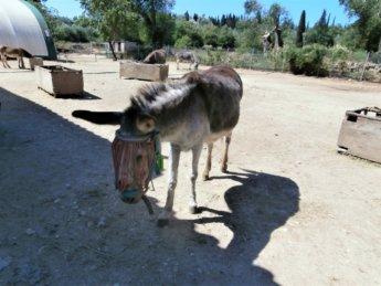 Corfu Donkey Rescue Greece 3