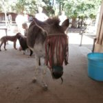 Corfu Donkey Rescue Greece 4