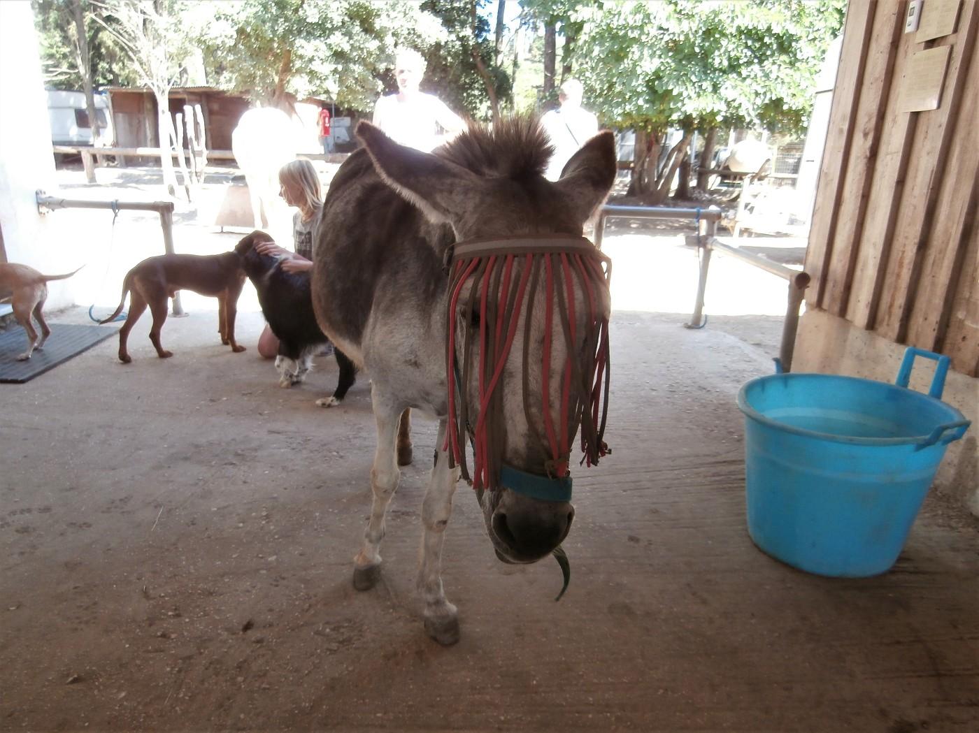 Corfu Donkey Rescue Greece 4