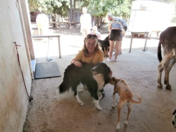 Corfu Donkey Rescue Greece 6