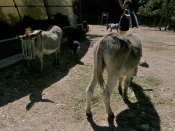 Corfu Donkey Rescue Greece 8