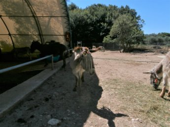 Corfu Donkey Rescue Greece 9