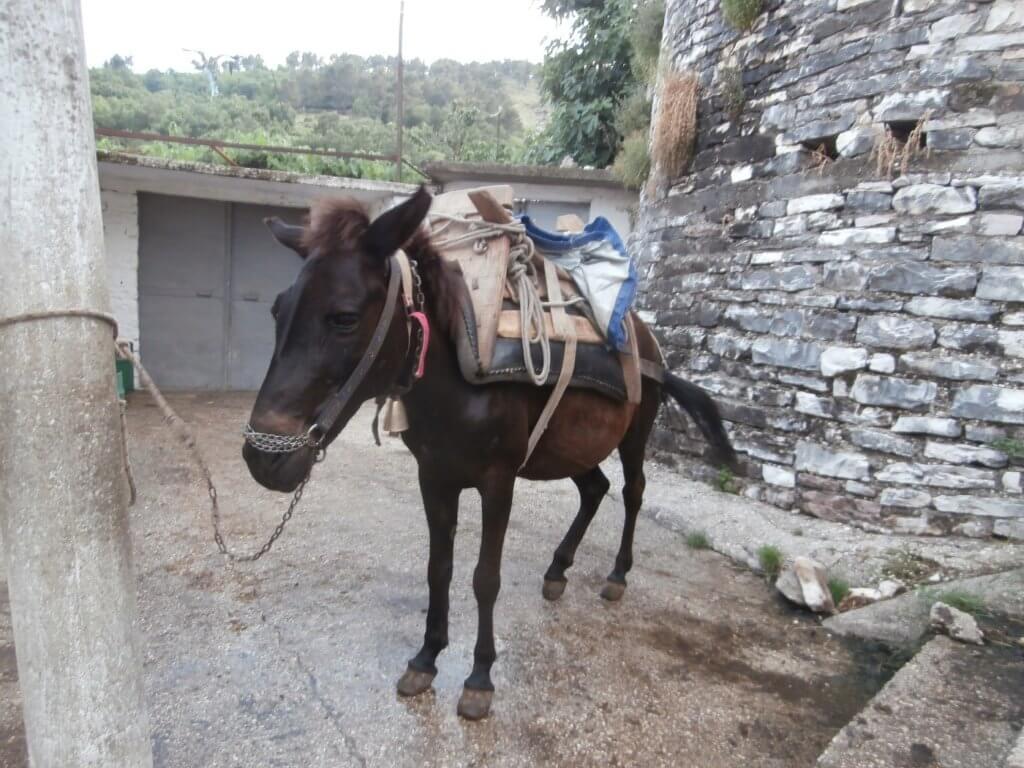 horse albania gjirokastër backpack equestrian fashion