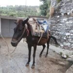 horse albania gjirokastër backpack equestrian fashion