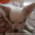 dogs of couchsurfing dogsofcouchsurfing albania tirana tirane