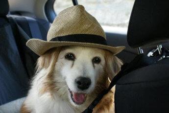 Ashley with my hat dog kooikerhondje