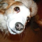loss on the road pet death Ashley kooikerhondje traveling