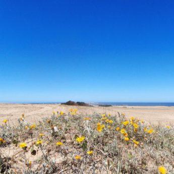 Cabo Polonio Uruguay hike sand dunes beach