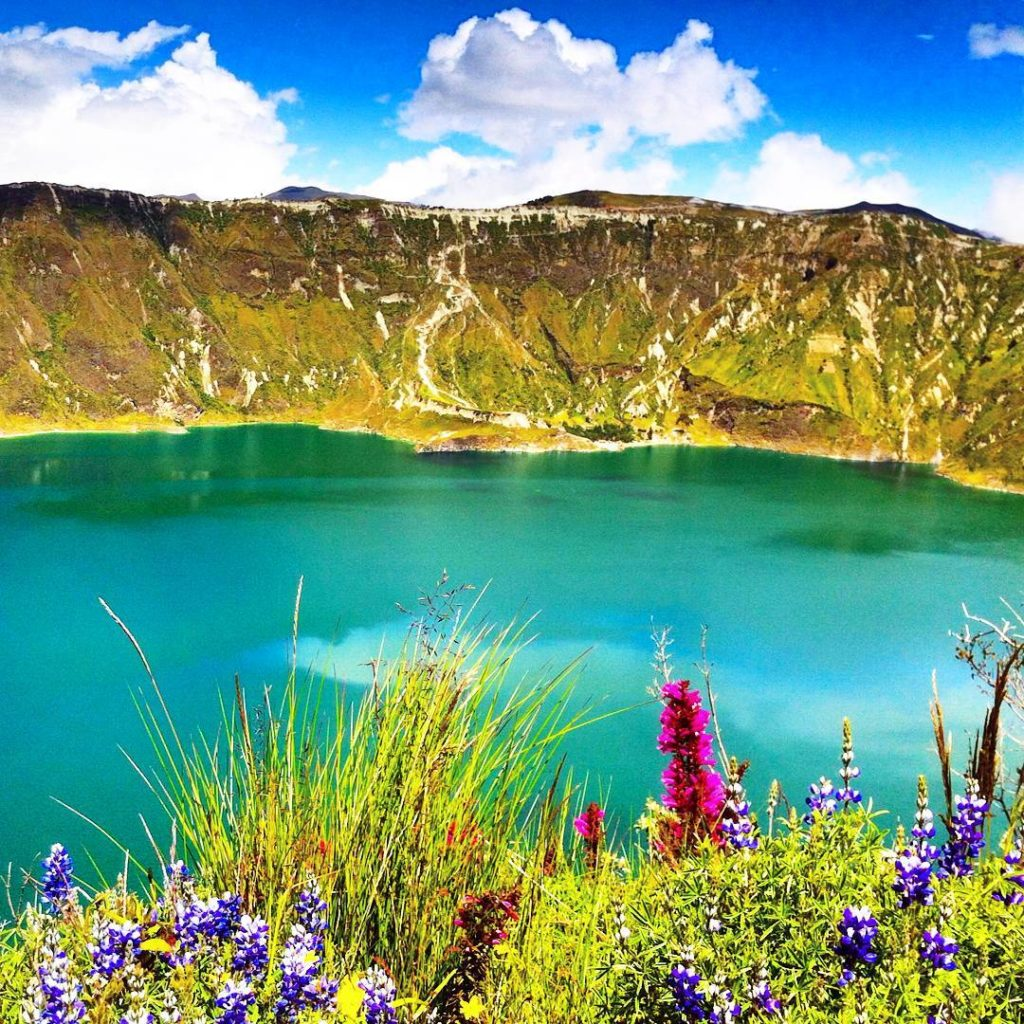 quilotoa caldera hike ecuador bush lupin flowers crater lake
