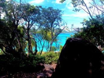 11 Cayo Cangrejo Crab Cay forest trail