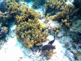 14 Snorkeling Providencia Old Providence Island San Andrés Archipelago Colombia