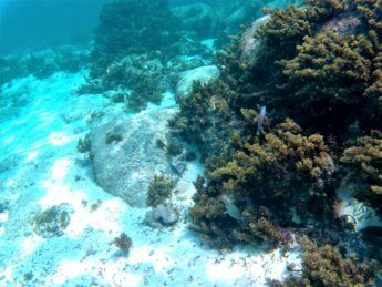 15 snorkeling Crab Cay Cayo Cangrejo Providencia Colombia
