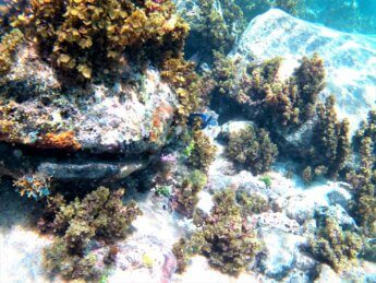 22 snorkeling coral reef fishies tropical Caribbean Sea Old Providence Colombia