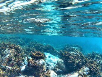 23 snorkeling coral reef Crab Cay Cayo Cangrejo Colombia