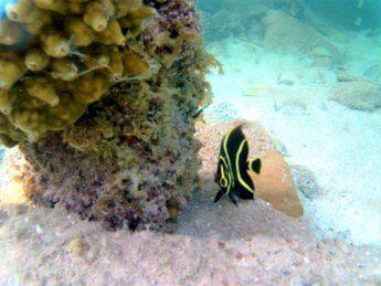 32 tropical fish Caribbean Sea Snorkeling Colombia San Andrés y Providencia pier