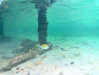 34 snorkeling tiny pier Providencia island Old Providence San Andrés
