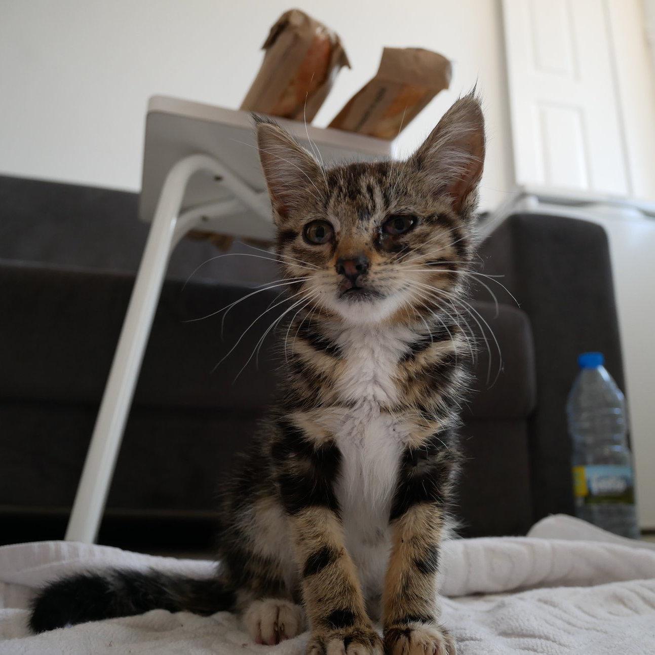 tragedy strikes kitten rescue porto portugal
