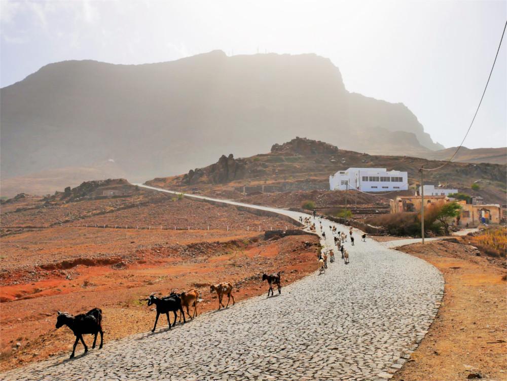 goat herder São Vicente Cabo Verde Monte Verde hike hitchhike
