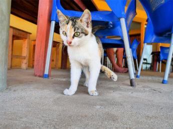 kitten Cabo Verde São Vicente Saõ Pedro beach cat stray street injured