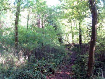 Grein Krummnußbaum 10