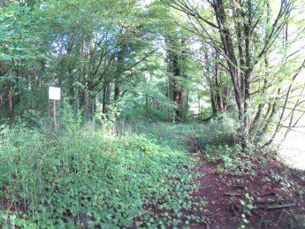 Grein Krummnußbaum 8
