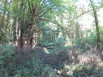Grein Krummnußbaum 9