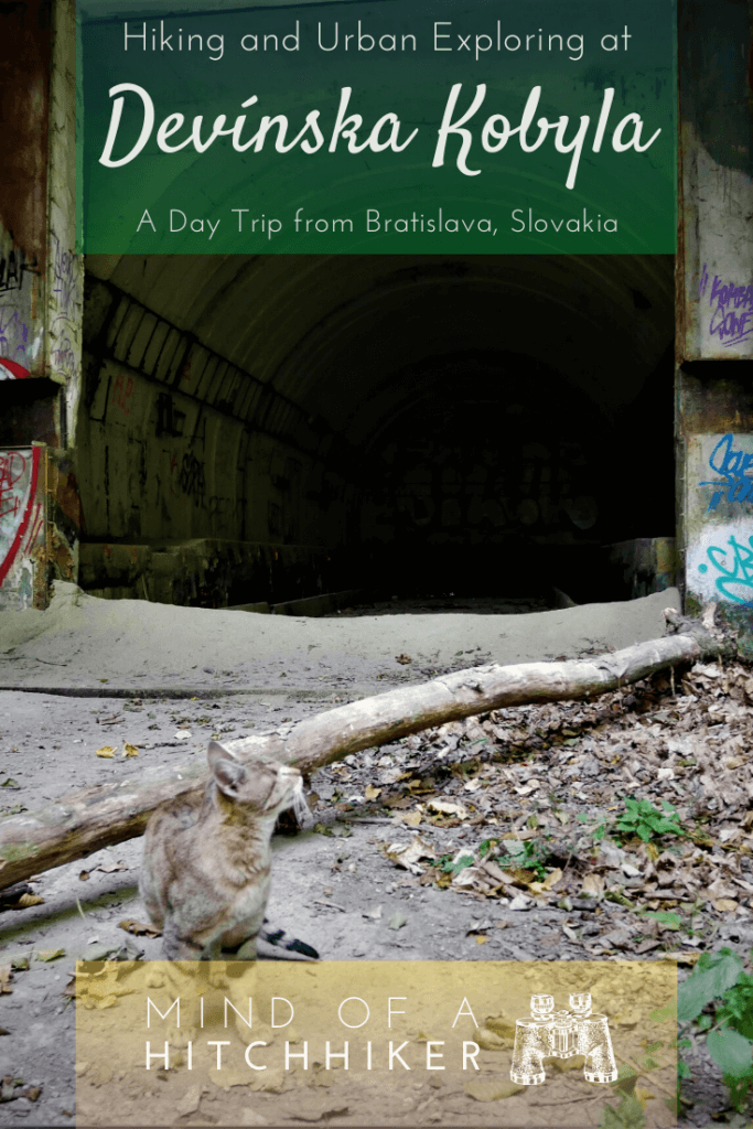 During our stay in Bratislava, we hiked up to Devínska Kobyla. There's an abandoned missile base good for urban exploring and meeting sweet pirate cats. #hiking #bratislava #slovakia #devin #devinskakobyla #coldwar #missilebase #urbanexploring #ux #urbanexploration #abandonedplaces #urbandecay #danube #morava #castle #ruins #straycat #cat #scrambling #autumn