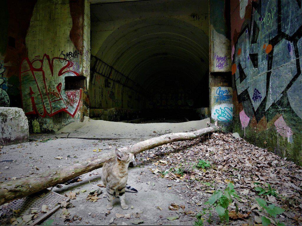18 adventure cat kitty slovakia bratislava military bunker