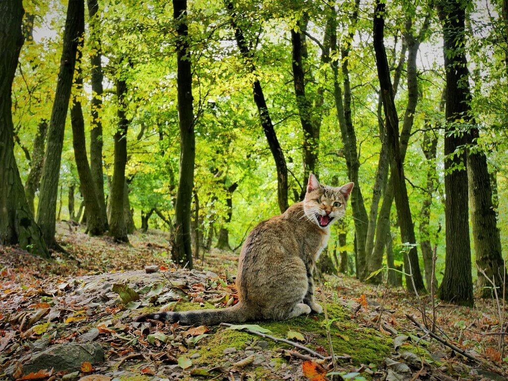 21 adventure pirate kitty one eyed cat forest national nature park