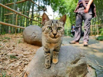 34 more cats in city park