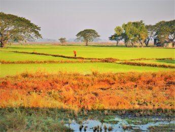 Myanmar train yangon mawlamyine 4 rice paddies