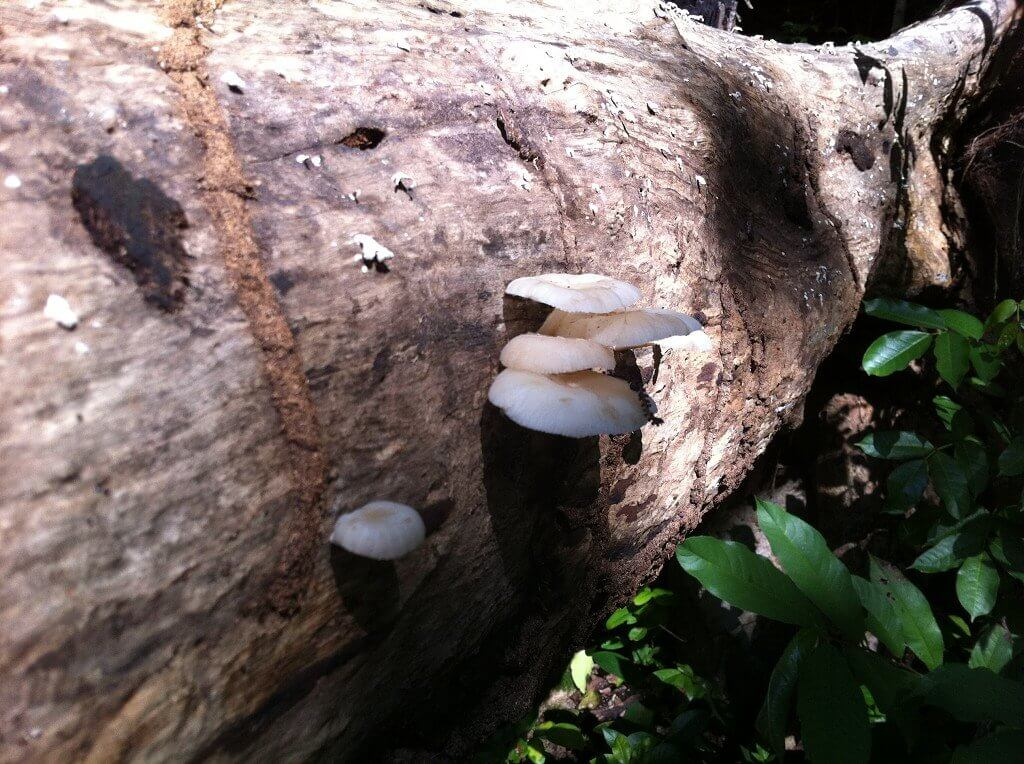 6 mushrooms in forest old providence the peak