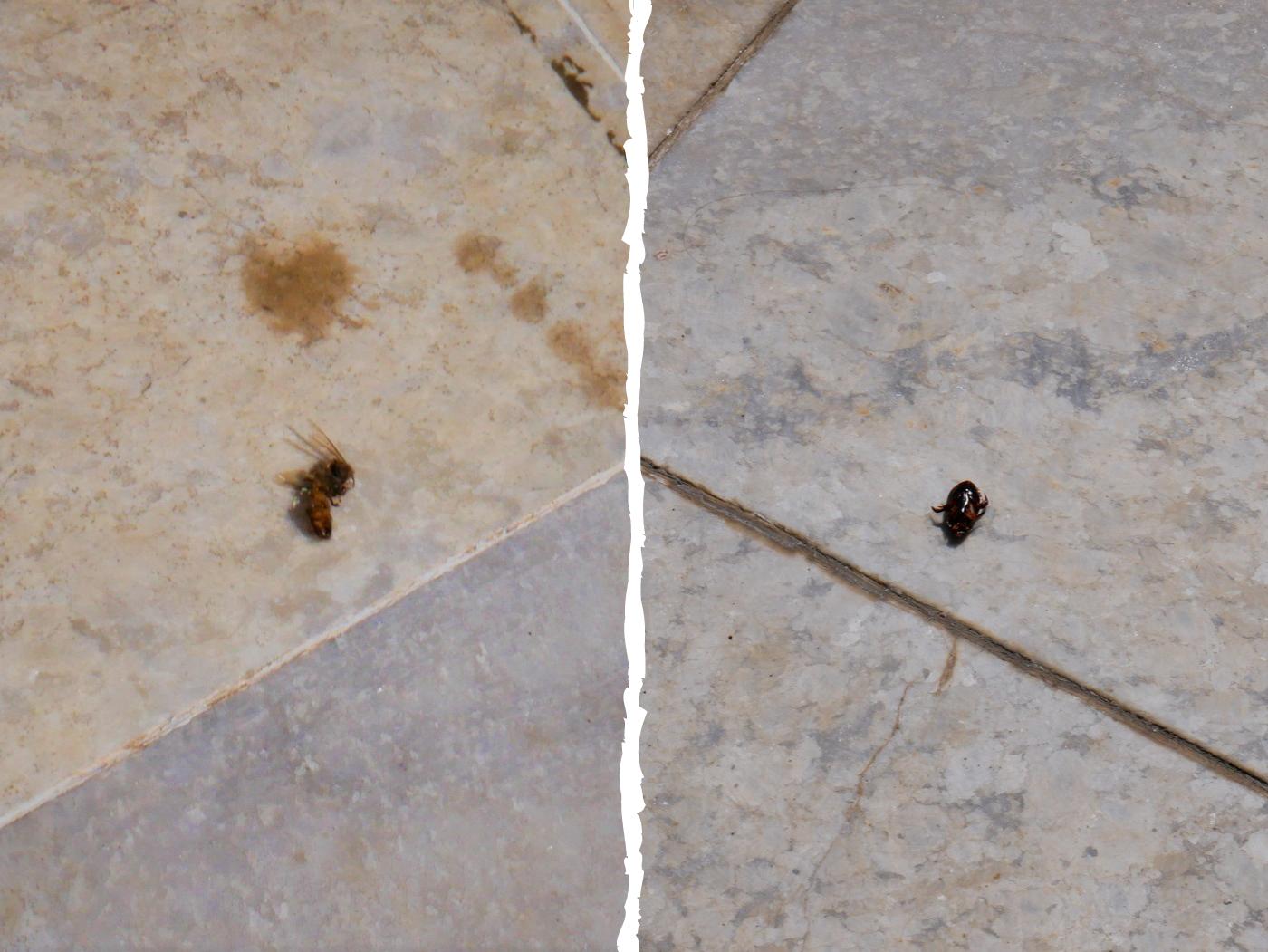 murder hornet naypyitaw UNBLURRED
