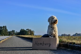 guest post hitchhiking with pets animals dog