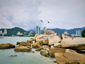 4 Pulau Tikus Rat Island Penang crows birds