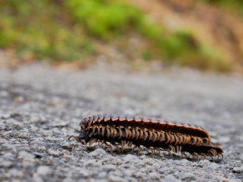 5 hiking bukit kledang bug from hell Ipoh Malaysia