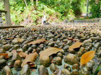7 pebble walk bukit kledang reflexology foot massage ipoh malaysia